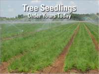Order Tree Seedlings