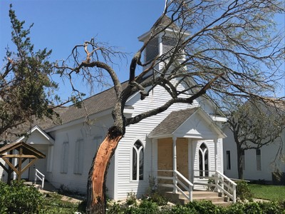 This tree was severely damaged by Hurricane Harvey as it blew through Rockport, Texas.