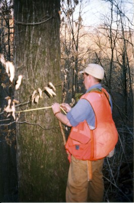 David Arnold, while Tennessee's first FIA program coordinator, measuring a large butternut tree with 18 inch diameter in Jackson County, TN.