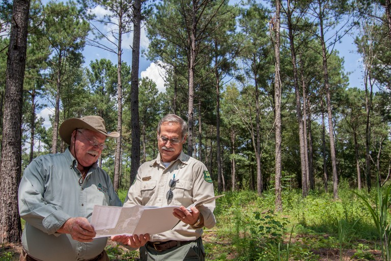Forester assists landowner in a forest