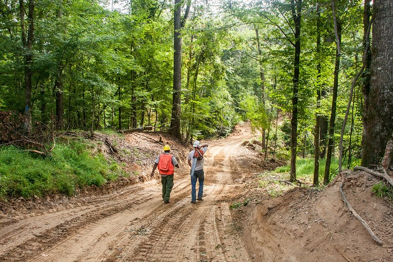 two loggers walking down a forest road