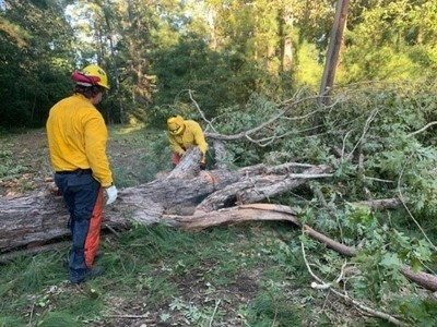 Volunteers working to remove downed timber in Texas after Hurricane Laura (TFS Photo)