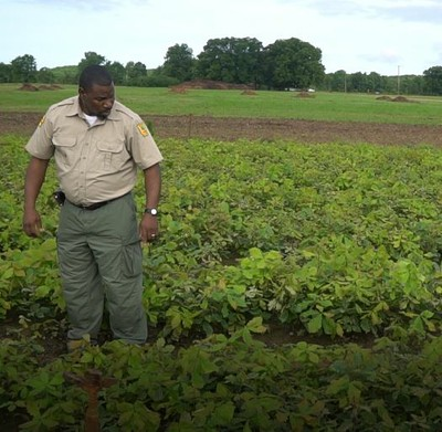 Shelton checks the progress of seedlings at Baucum Nursery.