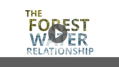 The Forest Water Relationship